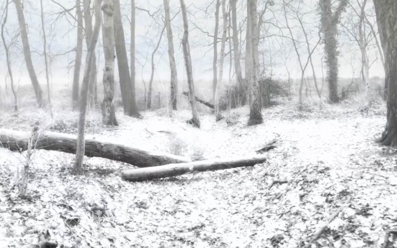 Add Realistic Snow To Any Scene Using After Effects